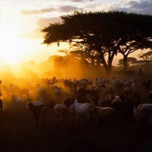 Safari maasi Kenya Africa